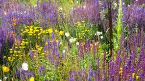 Flower field. Rural flower field blooming in July Stock Photography