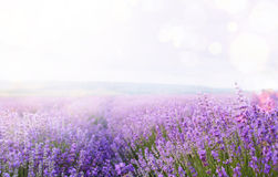Flower field and sky. Stock Image
