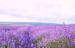 Flower field and sky. Stock Photos