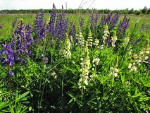 Flower field small paradise of ukraine stock photo