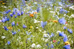 Flower field Royalty Free Stock Photo