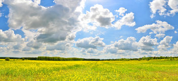 Flower field. In spring countryside stock photo