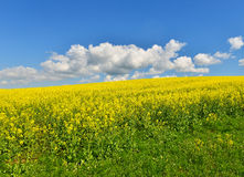 Flower field. In spring countryside royalty free stock image
