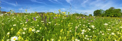 Flower field in springtime Royalty Free Stock Images