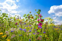 Flower field in summer. Natural field with various flowersin summer Stock Photos