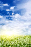 Flower field and sun. Flower field,sky and sun royalty free stock photography