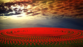 Flower field at sunset Royalty Free Stock Image