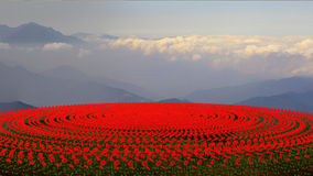 Flower field at sunset Royalty Free Stock Images