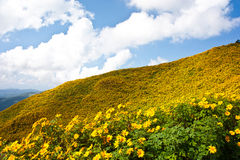 Flower field on top the hill Stock Photo