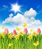 Flower field, tulips, narcissus, butterflies Royalty Free Stock Photography