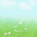 Flower field under a light blue sky Stock Photos