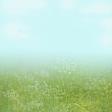 Flower field under a light blue sky background Stock Photos