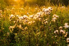Flower field under the morning sunlight Stock Photo