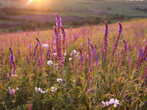 Flower field under sunlight Stock Photos