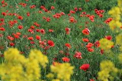 Flower, Field, Wildflower, Vegetation stock photography