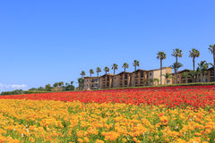 The Flower Fields Stock Photography