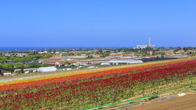 The Flower Fields Royalty Free Stock Photo