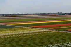 Flower fields Stock Images