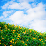 Flower fields in blue sky Royalty Free Stock Images