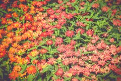 Flower fields, bright colors, stock images