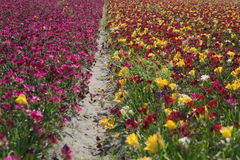 Flower fields colors nature Royalty Free Stock Image