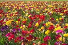 Flower fields colors nature Royalty Free Stock Photography
