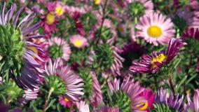 Flower Fields stock video