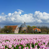 Flower fields in Lisse Stock Photo