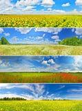 Flower fields Royalty Free Stock Image