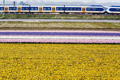 Flower fields train Stock Images