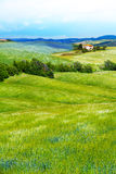 Flower filed in Tuscany landscape, Italy Royalty Free Stock Photo