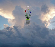 Flower filled bulb Stock Photography