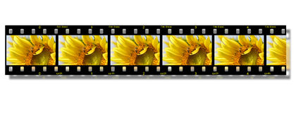 Flower film strip Royalty Free Stock Image