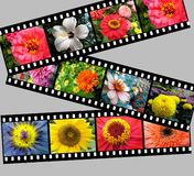 Flower filmstrip graphic Stock Photography