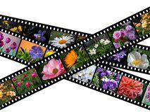 Flower filmstrip illustration. Illustration of filmstrips with images of flowers Royalty Free Stock Photo