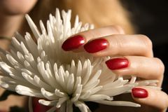 Flower and fingers Stock Photo