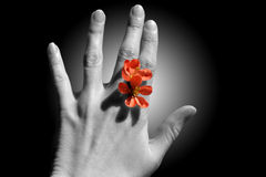 Flower between the fingers. Instead of ring Stock Photos