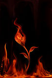 Flower fire Stock Photography