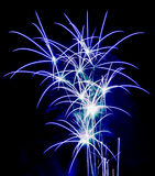 Flower Fireworks royalty free stock image
