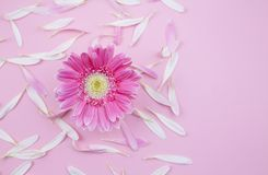 Flower flat lay royalty free stock photos