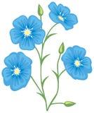 Flower of flax (Linum usitatissimum). Vector illustration Stock Illustration