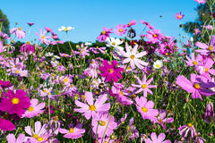 Flower flied Stock Photography