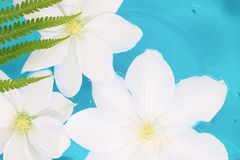 Flower floating in blue water, tropical colors stock photography