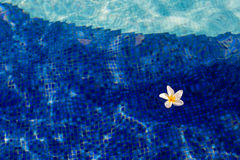 flower floating on the swimming pool Stock Images