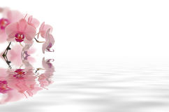 Flower floating in water Royalty Free Stock Photography