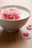 Flower floating in white bowl Royalty Free Stock Photo