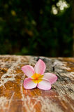 Flower on the floor Royalty Free Stock Photo