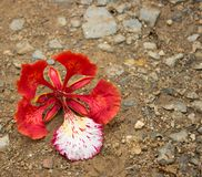 flower on the floor Royalty Free Stock Photos