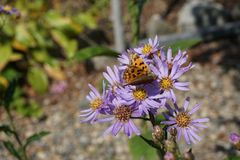 Flower, Flora, Aster, Plant stock image