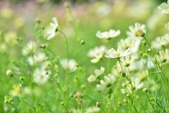 Flower, Flora, Grass, Meadow Royalty Free Stock Photos